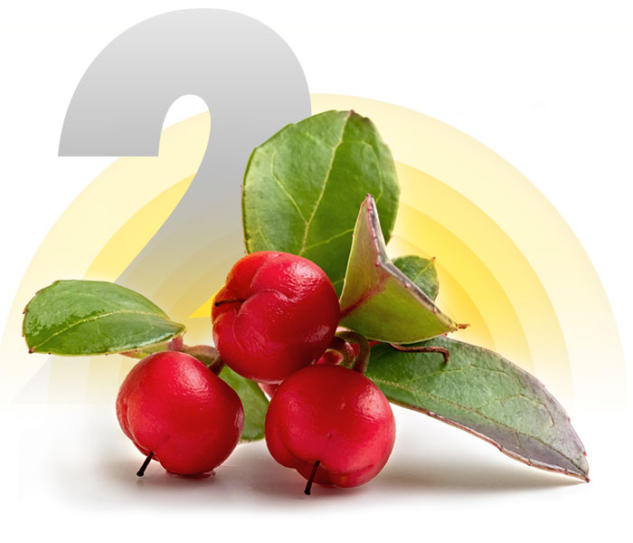 Wintergreen Berry
